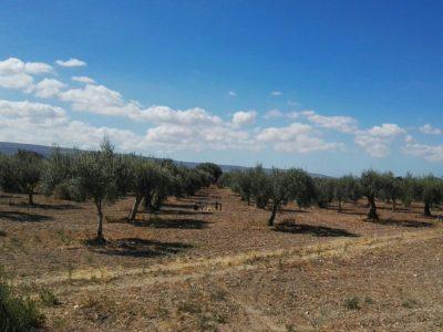 olijfboomgaard dimora di dante