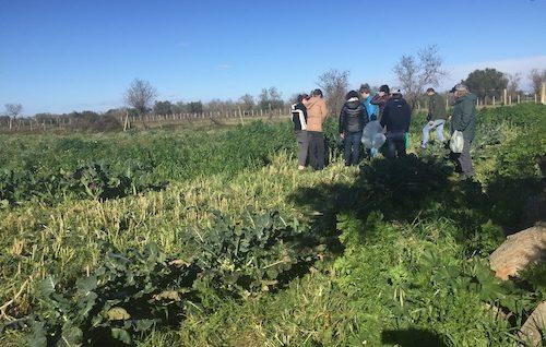 groenten plukken sicilie